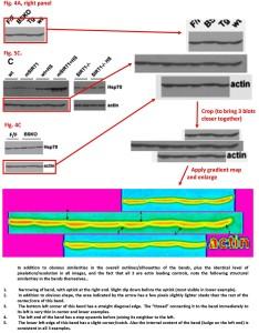 Donmez J Neurosci 4A5C4C